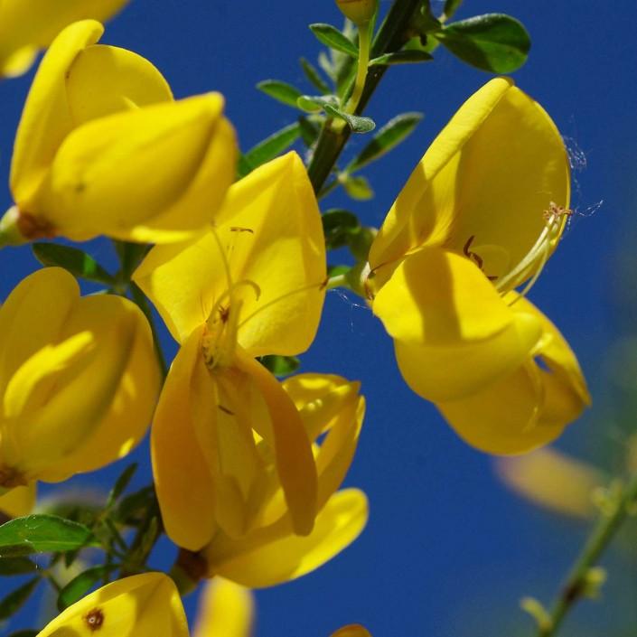 flower-116249